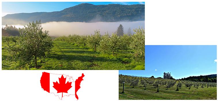 N4-Agosto-2021-03-Canada-plantilla_web-TSB.png