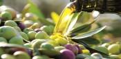 Otras virtudes del olivo y su fruto